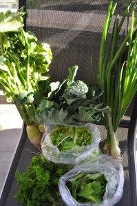 3rd CSA Harvest