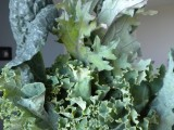 My 5th CSA Harvest: Kale, a Diamond in the Green Ruffage, Oxalic Acid and CaldoVerde