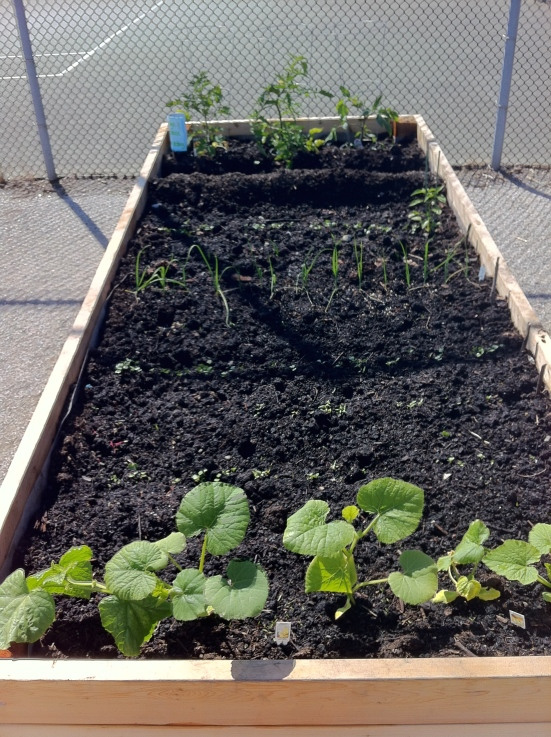 June Community Garden Plot
