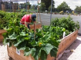 Starting a Garden to Grow Your Own Food