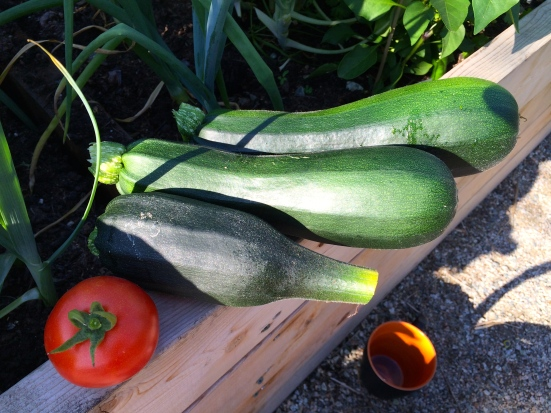 Zucchini Harvest with Tomato